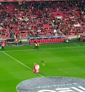 Dresserad Benfica-örn på väg att landa. Namn okänt.