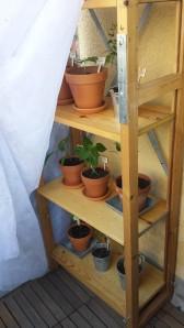 Pappas pepparhylla är på plats. Med ett solskydd som är mer av ett vindskydd just nu.